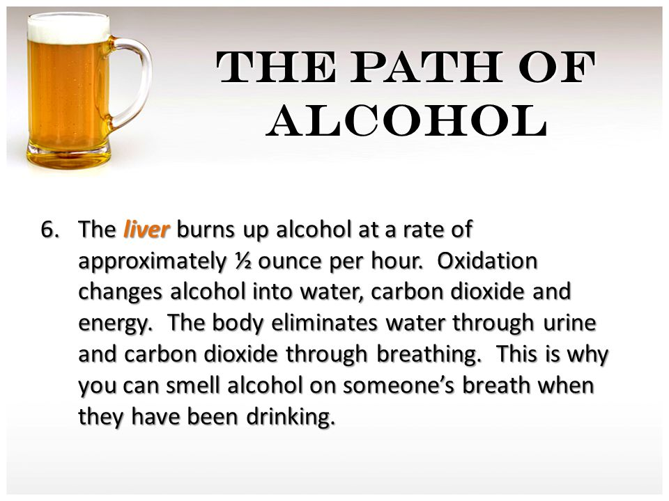 THE PATH OF ALCOHOL 6. The liver burns up alcohol at a rate of approximately ½ ounce per hour.