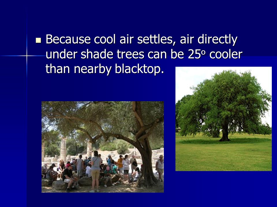 Because cool air settles, air directly under shade trees can be 25 o cooler than nearby blacktop.
