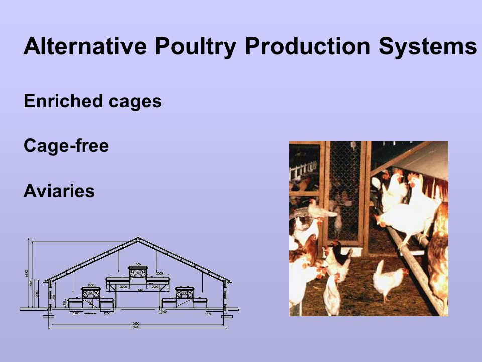 Alternative Poultry Production Systems Enriched cages Cage-free Aviaries