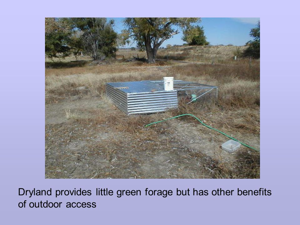 Dryland provides little green forage but has other benefits of outdoor access