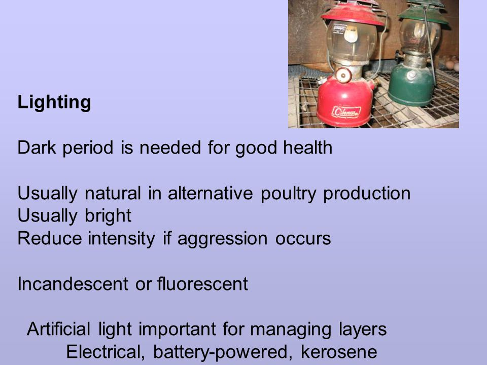 Lighting Dark period is needed for good health Usually natural in alternative poultry production Usually bright Reduce intensity if aggression occurs Incandescent or fluorescent Artificial light important for managing layers Electrical, battery-powered, kerosene
