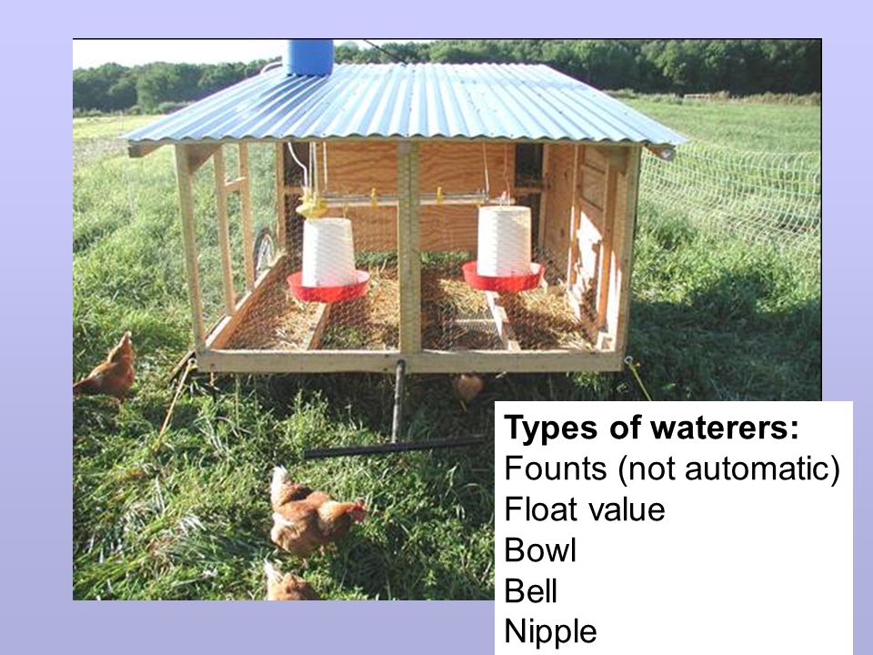 Types of waterers: Founts (not automatic) Float value Bowl Bell Nipple