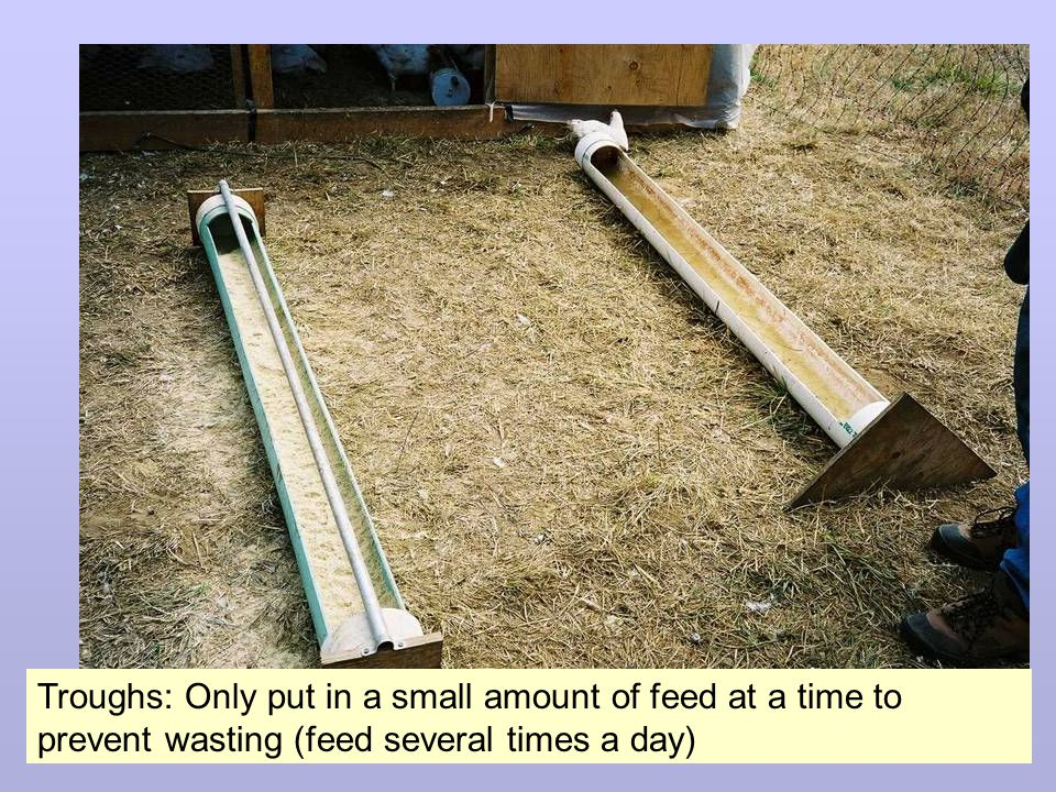 Troughs: Only put in a small amount of feed at a time to prevent wasting (feed several times a day)