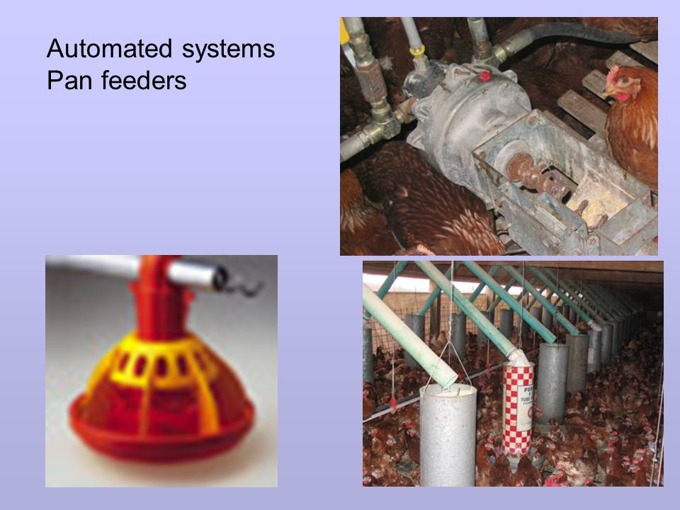 Automated systems Pan feeders