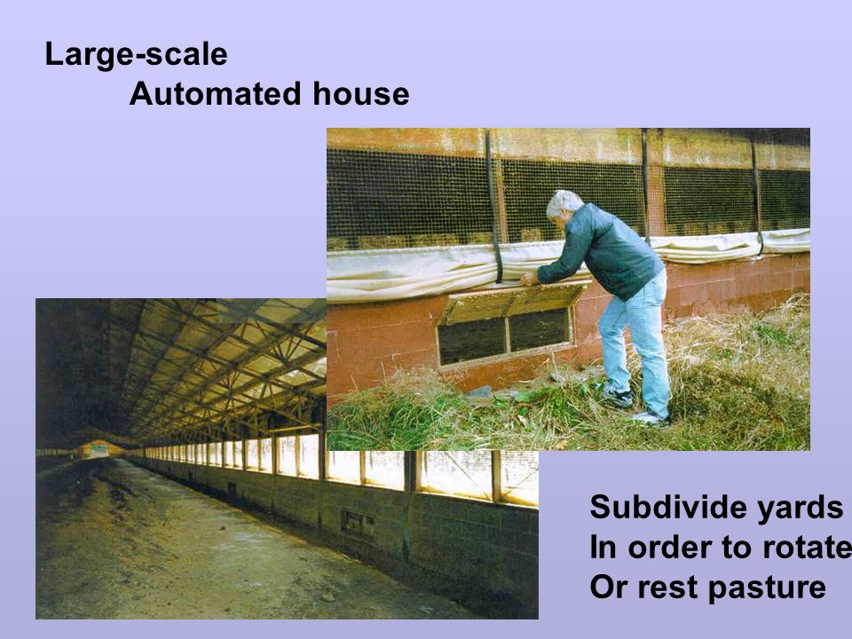 Large-scale Automated house Subdivide yards In order to rotate Or rest pasture