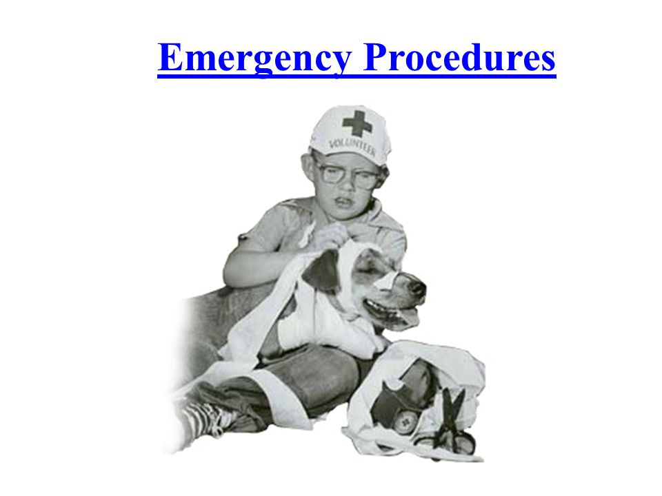 Toxicologic Emergencies Top 10 Toxicoses (2005) – Human medication (ibuprofen, acetominophen, anti- depressants) – Insecticides—flea and tick – Rodenticides—anticoagulants – Veterinary medication – Household cleaners—bleach, detergents – Plants—sago palm, lily, azalea – Herbicides – Chocolate—highest in food category – Home improvement products—solvents, adhesives, paint, wood glue – Fertilizers