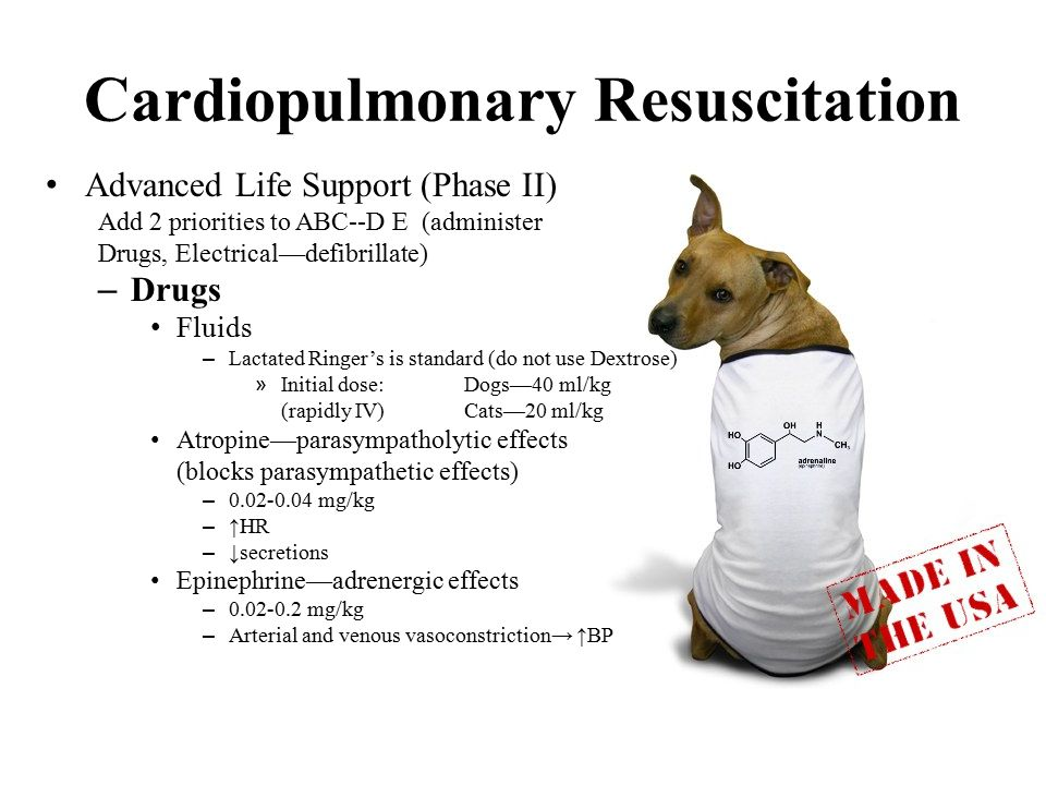 Cardiopulmonary Resuscitation Advanced Life Support (Phase II) Add 2 priorities to ABC--D E (administer Drugs, Electrical—defibrillate) – Drugs Fluids – Lactated Ringer's is standard (do not use Dextrose) » Initial dose:Dogs—40 ml/kg (rapidly IV)Cats—20 ml/kg Atropine—parasympatholytic effects (blocks parasympathetic effects) – 0.02-0.04 mg/kg – ↑HR – ↓secretions Epinephrine—adrenergic effects – 0.02-0.2 mg/kg – Arterial and venous vasoconstriction→ ↑BP