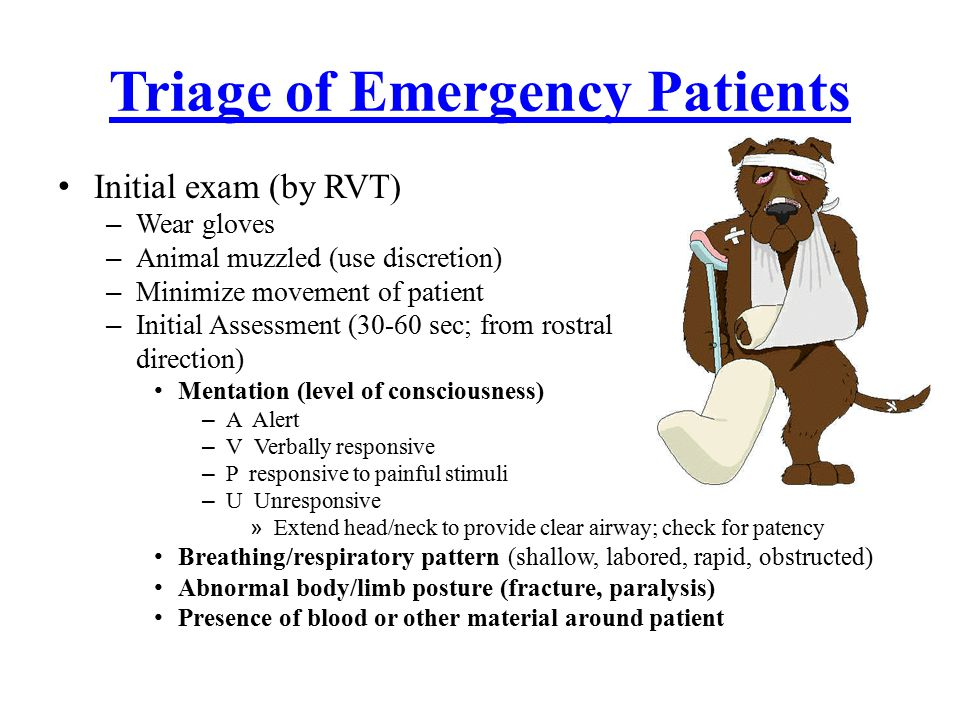 Heat Stroke TREATMENT Mild cases: move dog to a/c building or car – Temp >104º, immerged in cool water, hose down, fan, wet cloths – Temp >106º, cool water enema (cool to 103º) – Temp >109° leads to multiple organ failure STOP COOLING EFFORTS AT 104º – IV fluids – Corticosteroids