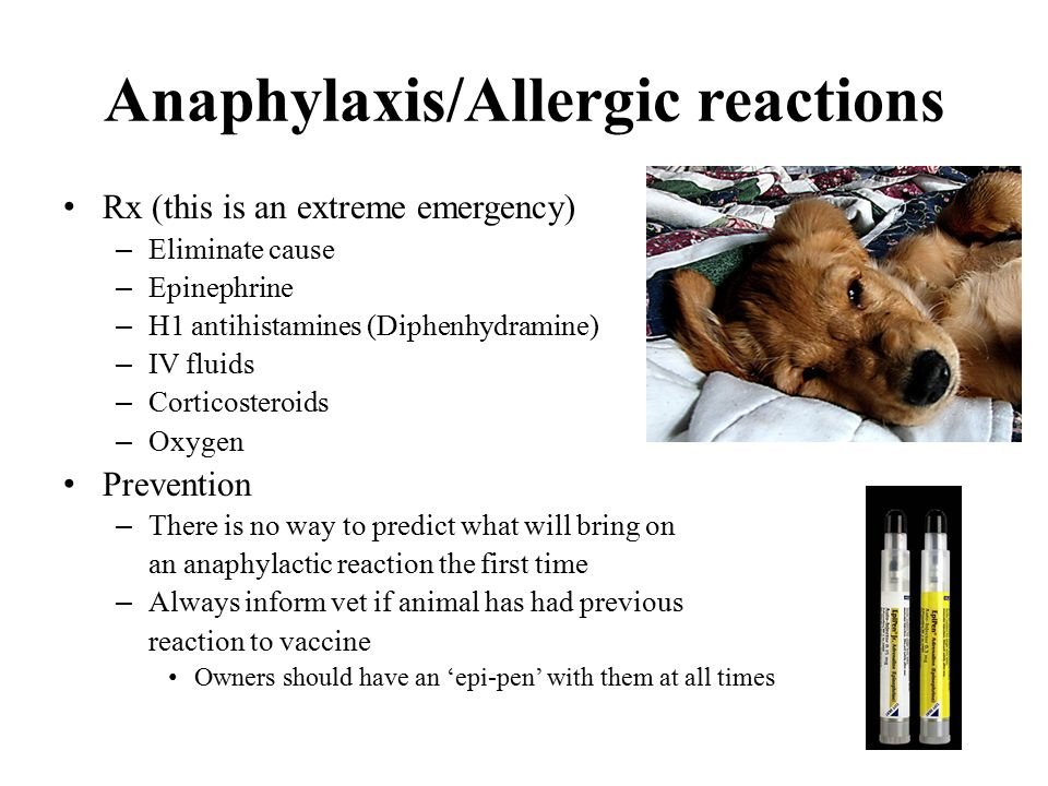 Anaphylaxis/Allergic reactions Rx (this is an extreme emergency) – Eliminate cause – Epinephrine – H1 antihistamines (Diphenhydramine) – IV fluids – Corticosteroids – Oxygen Prevention – There is no way to predict what will bring on an anaphylactic reaction the first time – Always inform vet if animal has had previous reaction to vaccine Owners should have an 'epi-pen' with them at all times