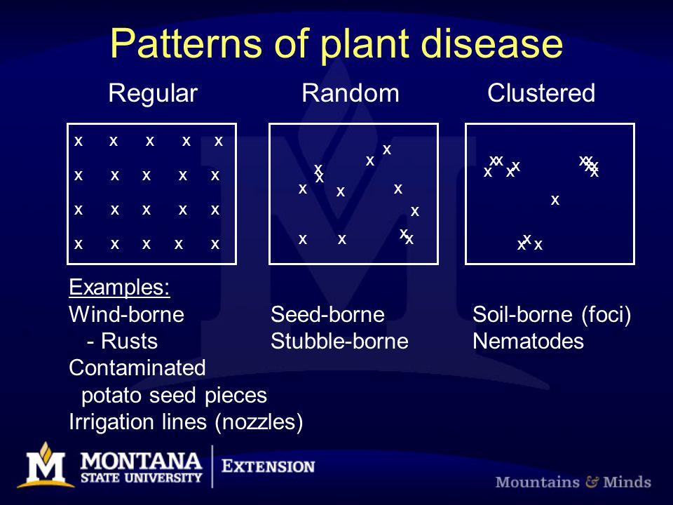 Patterns of plant disease x Regular Random Clustered x x x x x x x x x x x x x xx xxx x x x x x x x x x x x x Examples: Wind-borneSeed-borneSoil-borne (foci) - RustsStubble-borneNematodes Contaminated potato seed pieces Irrigation lines (nozzles)