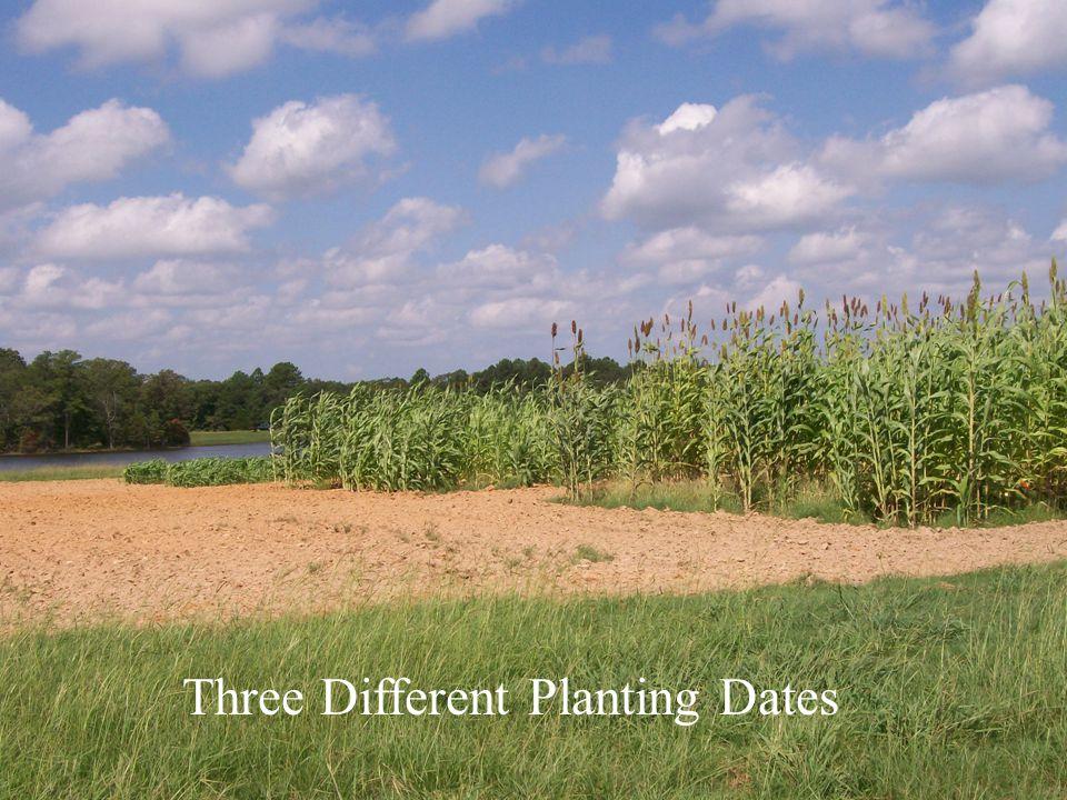 Three Different Planting Dates