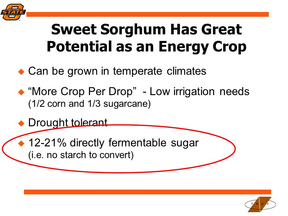 Sweet Sorghum Has Great Potential as an Energy Crop  Can be grown in temperate climates  More Crop Per Drop - Low irrigation needs (1/2 corn and 1/3 sugarcane)  Drought tolerant  12-21% directly fermentable sugar (i.e.