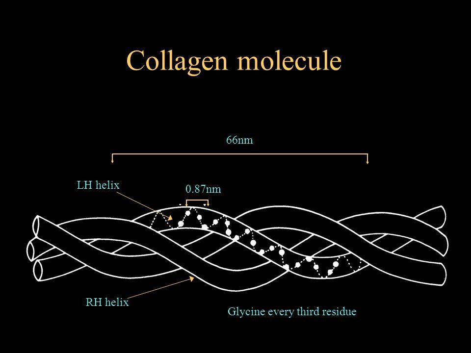 0.87nm 66nm Glycine every third residue Collagen molecule LH helix RH helix