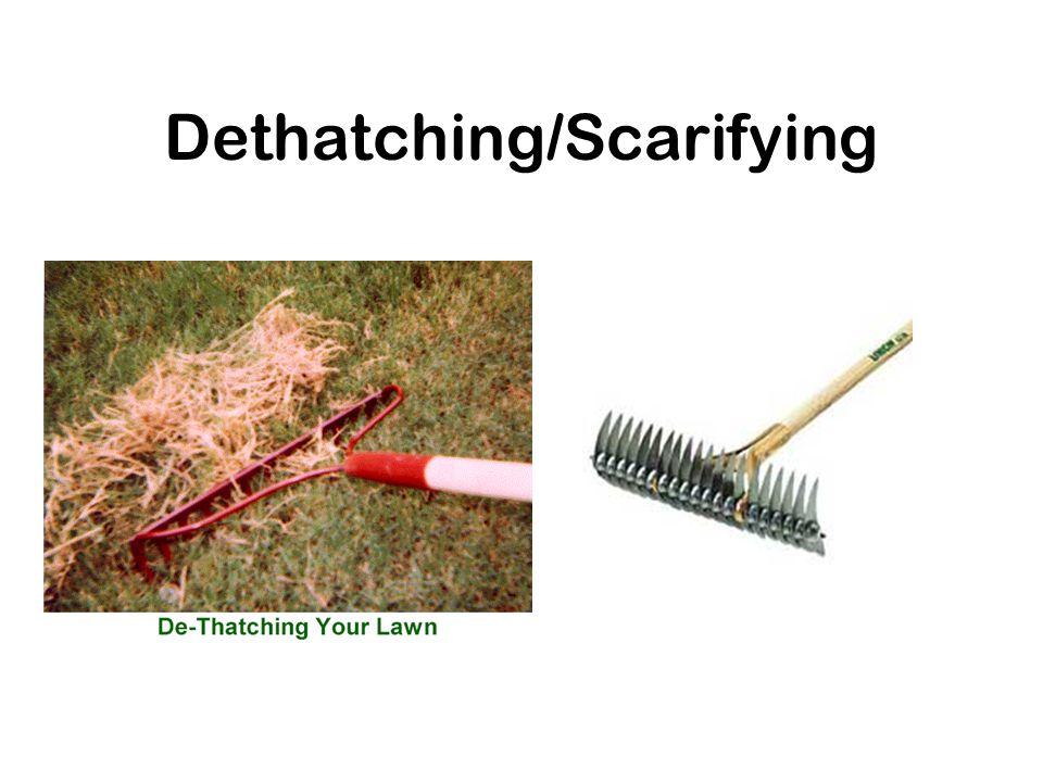 Dethatching/Scarifying