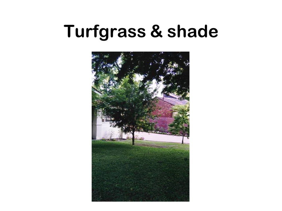 Types of turfgrass Regional adaptation of species –Cool season grasses Grows well at 60-75F Growth ceases over 80F Intolerant of heavy shade –Warm season grasses Grows well at 80-95F Dormant in winter (brown)