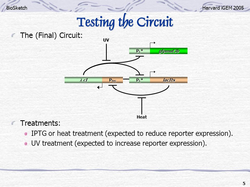 BioSketchHarvard iGEM 2005 6 Expected Results of IPTG/Heat Treatment Collins switch was always tested @ 37C.