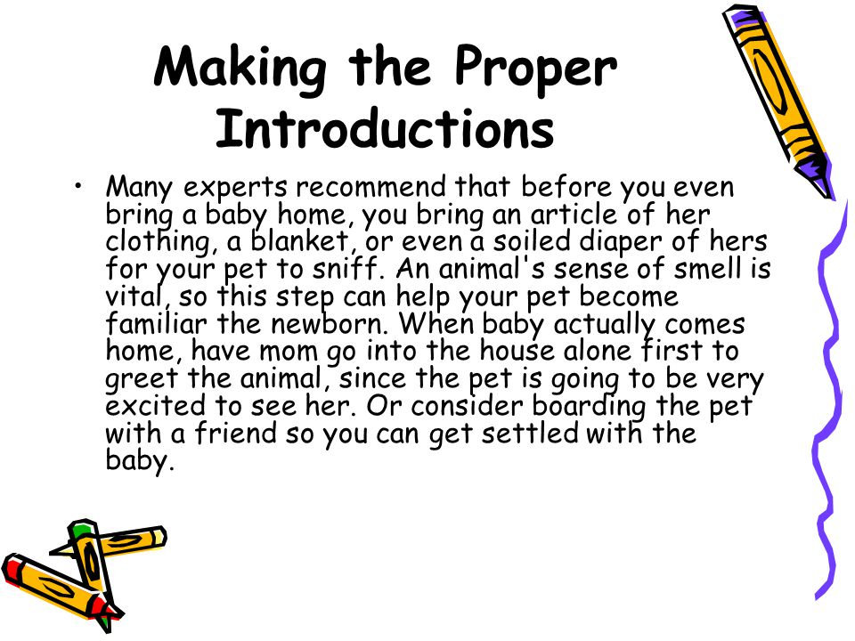 Making the Proper Introductions Many experts recommend that before you even bring a baby home, you bring an article of her clothing, a blanket, or even a soiled diaper of hers for your pet to sniff.