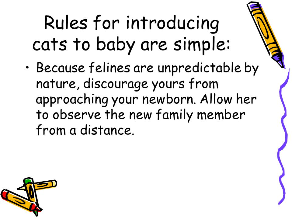 Rules for introducing cats to baby are simple: Because felines are unpredictable by nature, discourage yours from approaching your newborn.