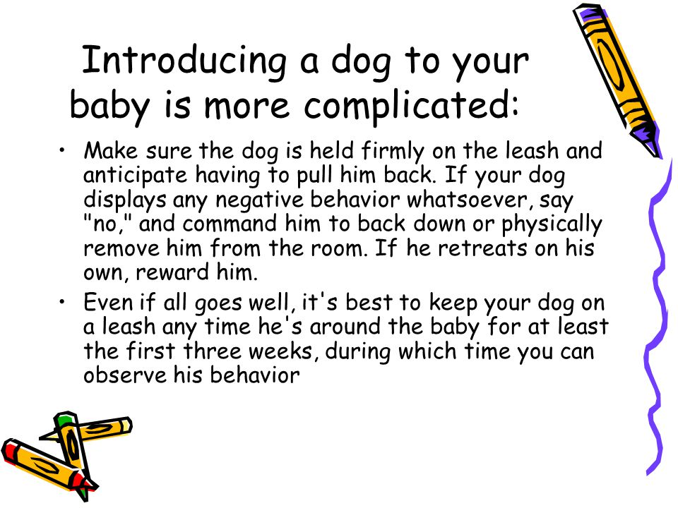 Introducing a dog to your baby is more complicated: Make sure the dog is held firmly on the leash and anticipate having to pull him back.