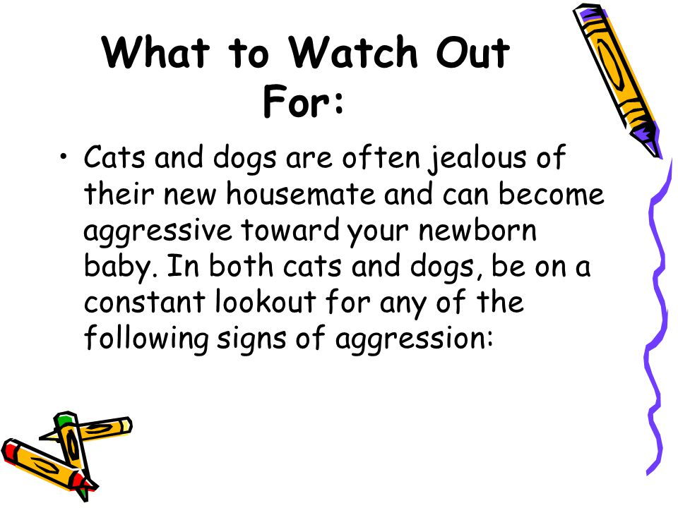 What to Watch Out For: Cats and dogs are often jealous of their new housemate and can become aggressive toward your newborn baby.