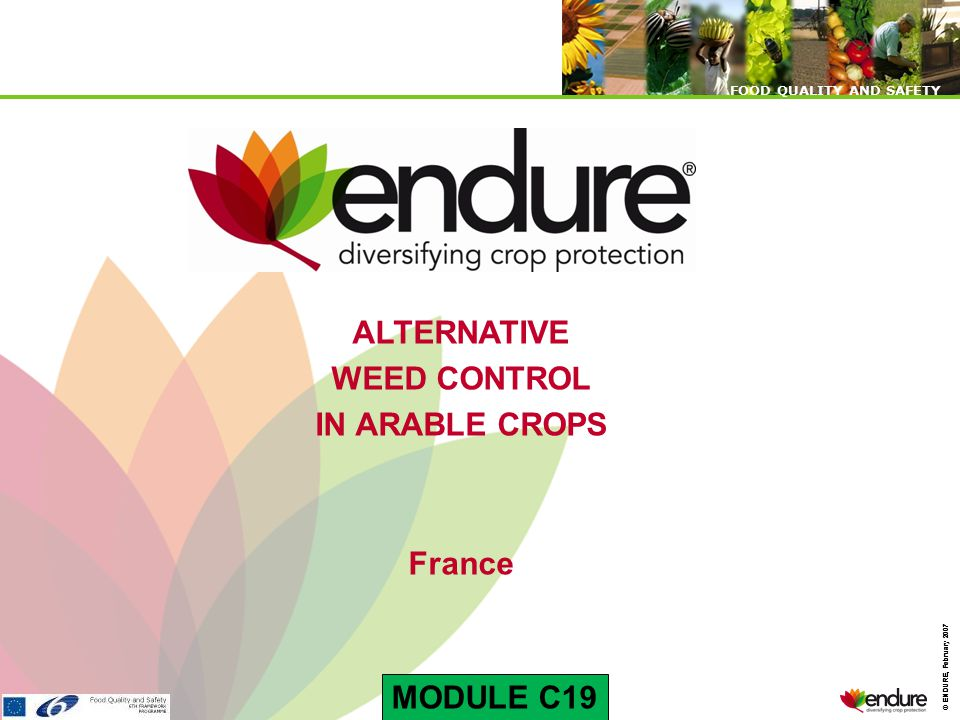 © ENDURE, February 2007 FOOD QUALITY AND SAFETY © ENDURE, February 2007 FOOD QUALITY AND SAFETY Aims of weed mechanical or mixt control : Sustainable use of herbicides Background: reduction of pesticides in France → Grenelle Environment → Basin supply catchment Reducing the cost of herbicides use → 15-25% of operating expenses Sustainable herbicide The technical plus → Effect on soil warming → Interest in the positioning of fertilizers → Enable mineralization