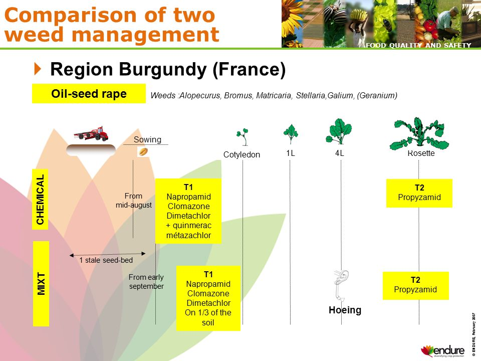 © ENDURE, February 2007 FOOD QUALITY AND SAFETY © ENDURE, February 2007 FOOD QUALITY AND SAFETY Comparison of two weed management  Region Burgundy (France) Semis MIXT CHEMICAL Maize Weeds : Summer grasses, Chenopodium, Amaranthus, Solanum nigrum 2 L Hoeing Emergence4 L5-6 L8 L Cover- cropping And Tillage T1 Acetochlore + dichlormid T1 Mesotrione + s-métolachlor On the sowing row