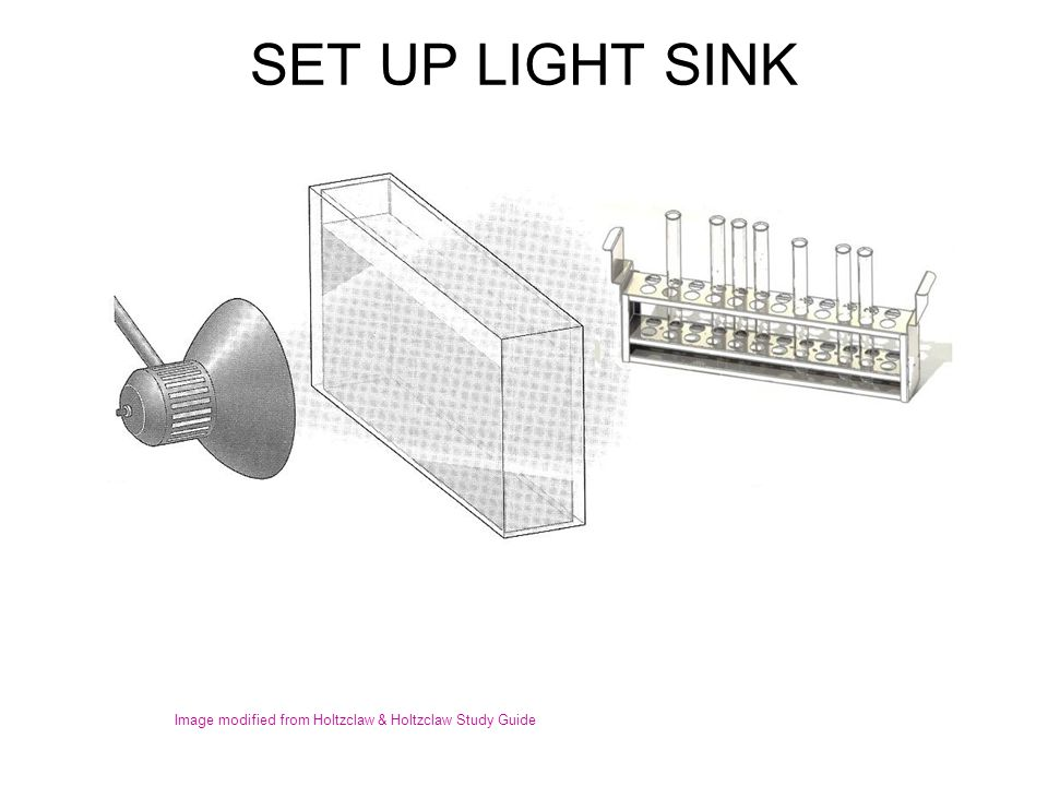 SET UP LIGHT SINK Image modified from Holtzclaw & Holtzclaw Study Guide