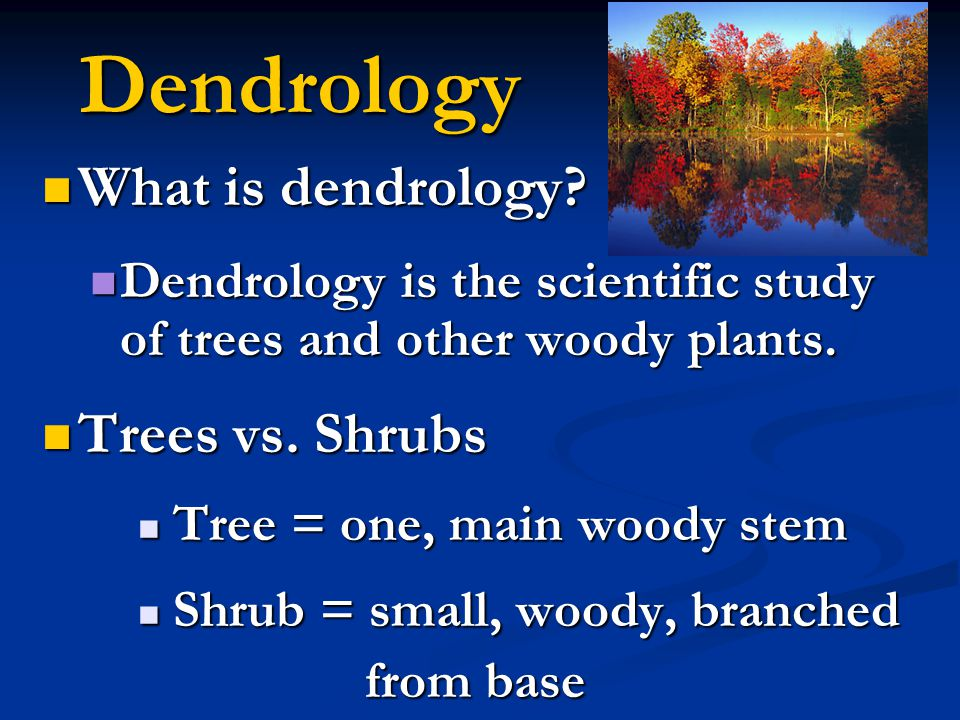 Dendrology What is dendrology? What is dendrology? Dendrology is the scientific study of trees and other woody plants. Dendrology is the scientific st