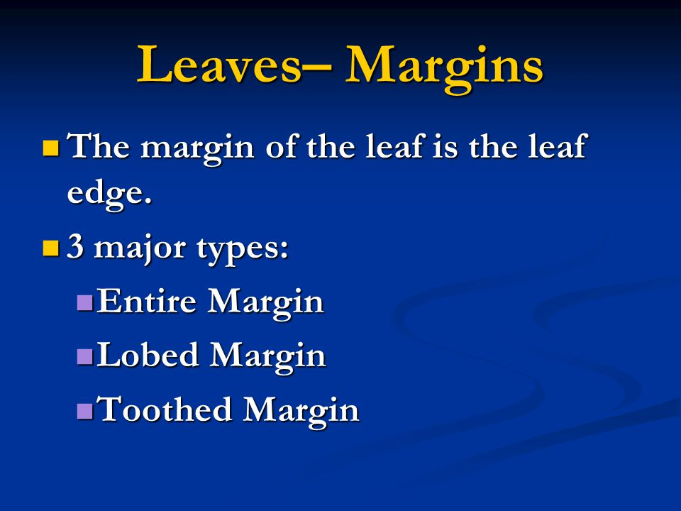 Leaves– Margins The margin of the leaf is the leaf edge. The margin of the leaf is the leaf edge. 3 major types: 3 major types: Entire Margin Entire M