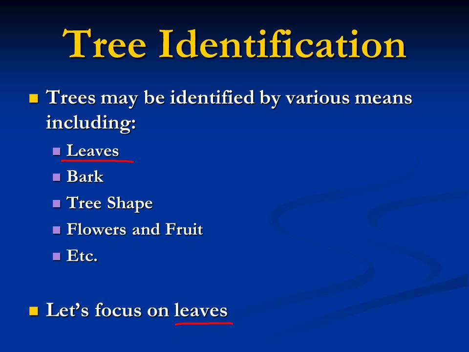 Tree Identification Trees may be identified by various means including: Trees may be identified by various means including: Leaves Leaves Bark Bark Tr