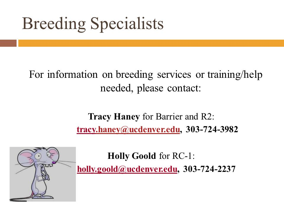 Breeding Specialists For information on breeding services or training/help needed, please contact: Tracy Haney for Barrier and R2: tracy.haney@ucdenver.edu, 303-724-3982.haney@ucdenver.edu Holly Goold for RC-1: holly.goold@ucdenver.edu, 303-724-2237