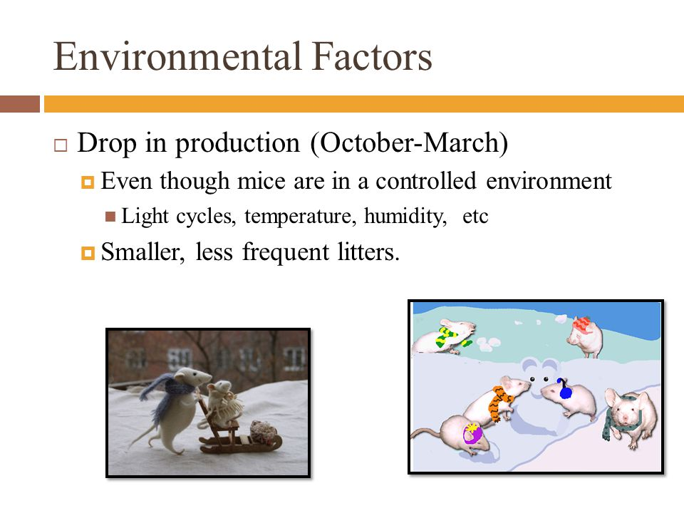 Environmental Factors  Drop in production (October-March)  Even though mice are in a controlled environment Light cycles, temperature, humidity, etc  Smaller, less frequent litters.