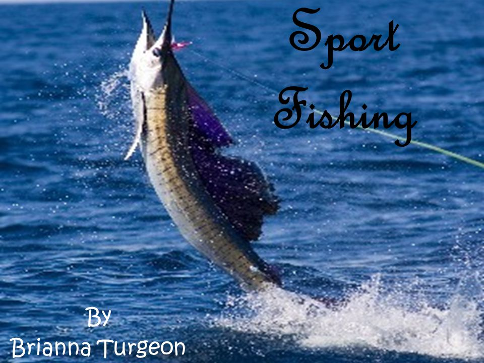Sport Fishing By Brianna Turgeon