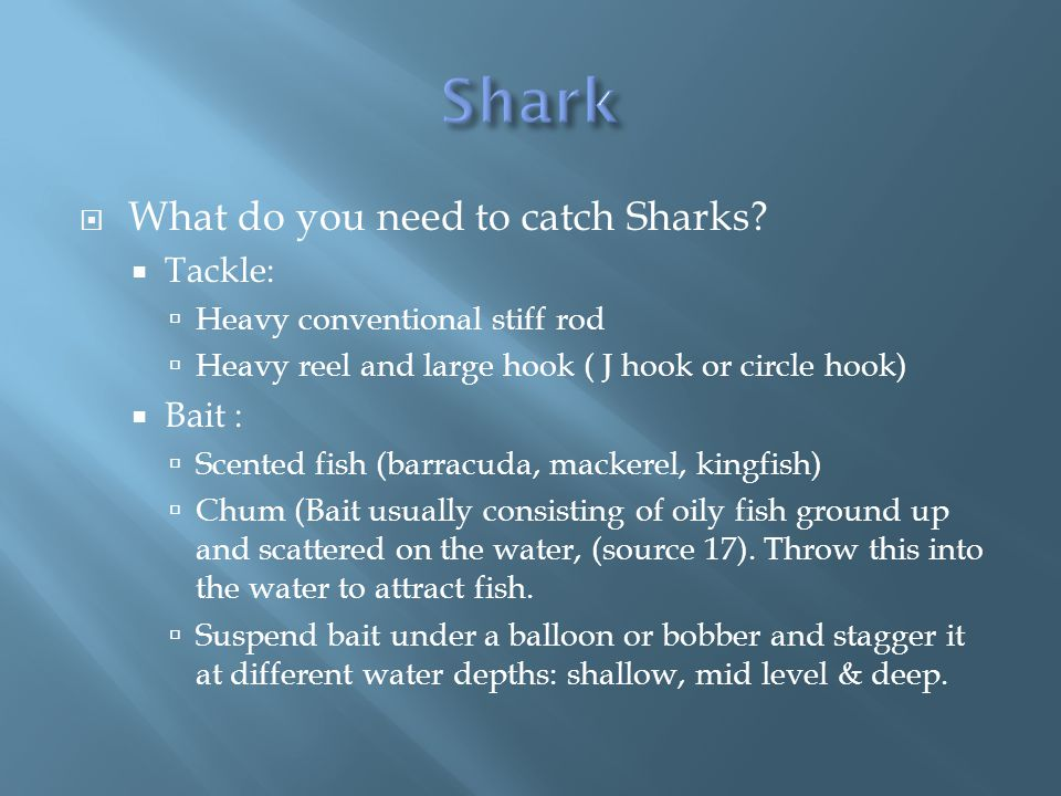  What do you need to catch Sharks.