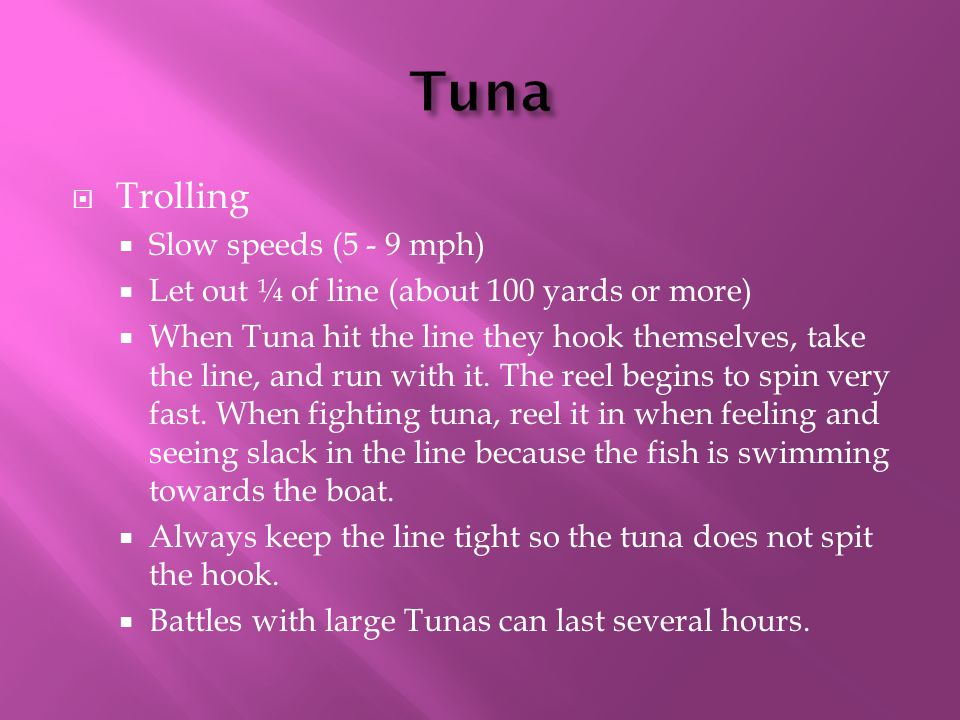  Trolling  Slow speeds (5 - 9 mph)  Let out ¼ of line (about 100 yards or more)  When Tuna hit the line they hook themselves, take the line, and run with it.