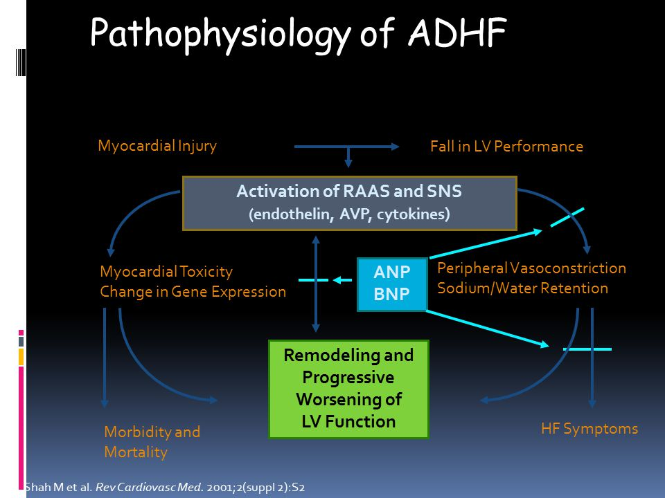Myocardial Toxicity Change in Gene Expression ANP BNP Pathophysiology of ADHF Myocardial Injury Fall in LV Performance Activation of RAAS and SNS (endothelin, AVP, cytokines ) Peripheral Vasoconstriction Sodium/Water Retention HF Symptoms Morbidity and Mortality Remodeling and Progressive Worsening of LV Function Shah M et al.