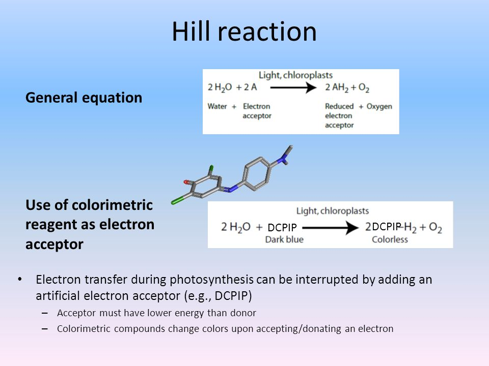 Hill reaction Electron transfer during photosynthesis can be interrupted by adding an artificial electron acceptor (e.g., DCPIP) – Acceptor must have