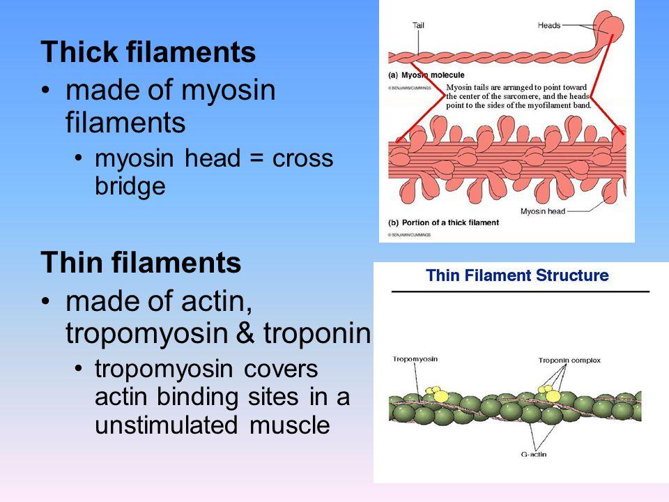 Thick filaments made of myosin filaments myosin head = cross bridge Thin filaments made of actin, tropomyosin & troponin tropomyosin covers actin bind