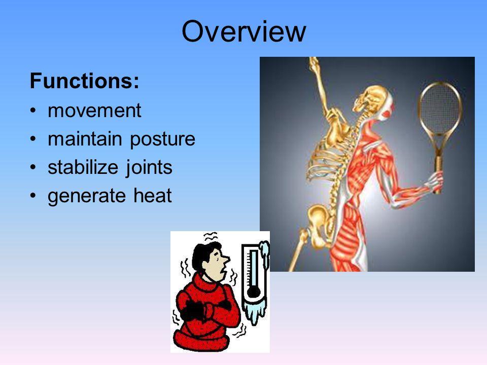 1) Skeletal 2) Cardiac 3) Smooth Striated - striated - not striated voluntary - involuntary - involuntary 3 Types