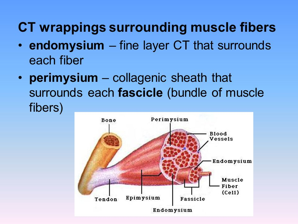 muscle tone is achieved by random, asynchronous motor unit contractions that provide a constant state of low-level tension without stimulation, muscle loses tone