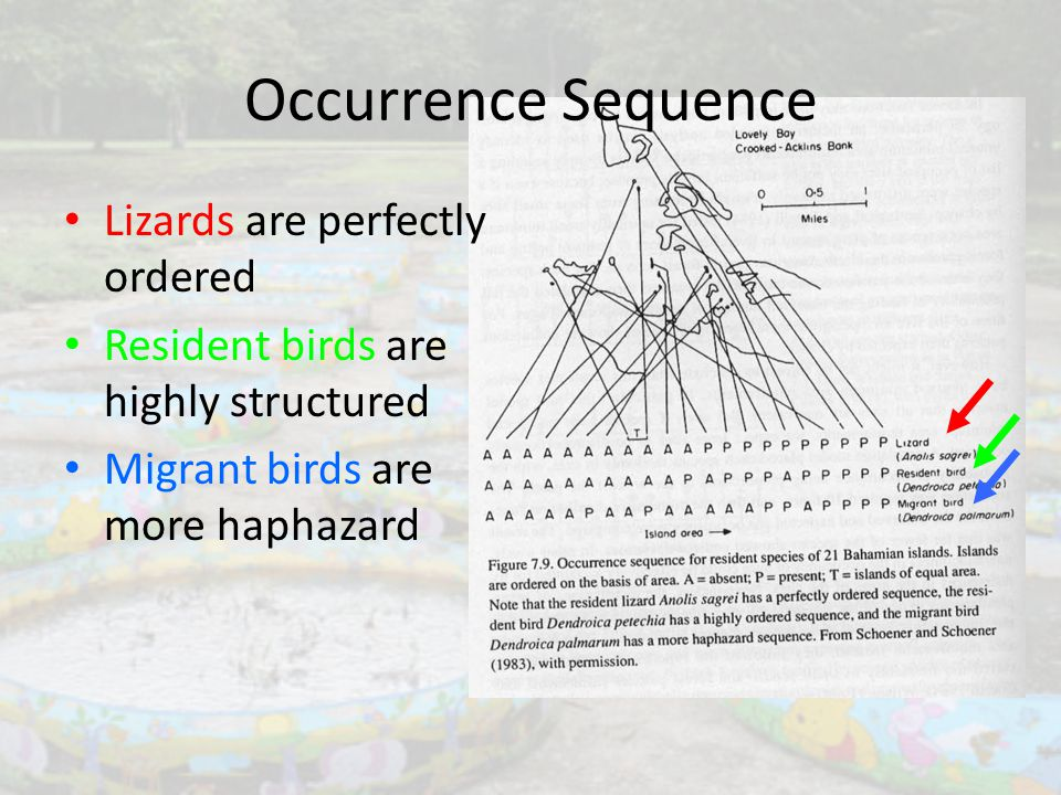 Lizards are perfectly ordered Resident birds are highly structured Migrant birds are more haphazard Occurrence Sequence