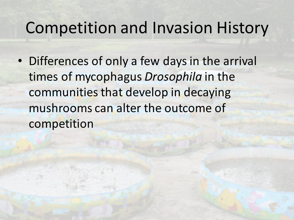 Competition and Invasion History Differences of only a few days in the arrival times of mycophagus Drosophila in the communities that develop in decay