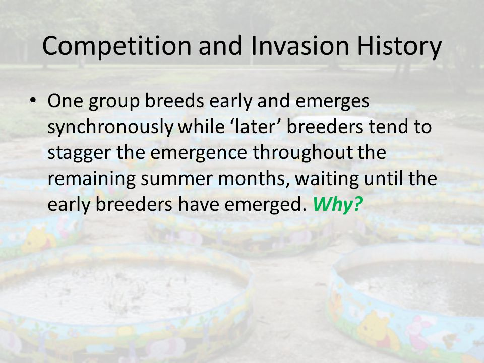 Competition and Invasion History One group breeds early and emerges synchronously while 'later' breeders tend to stagger the emergence throughout the remaining summer months, waiting until the early breeders have emerged.