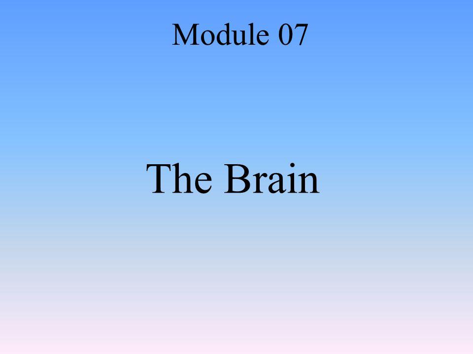 The Brain Module 07