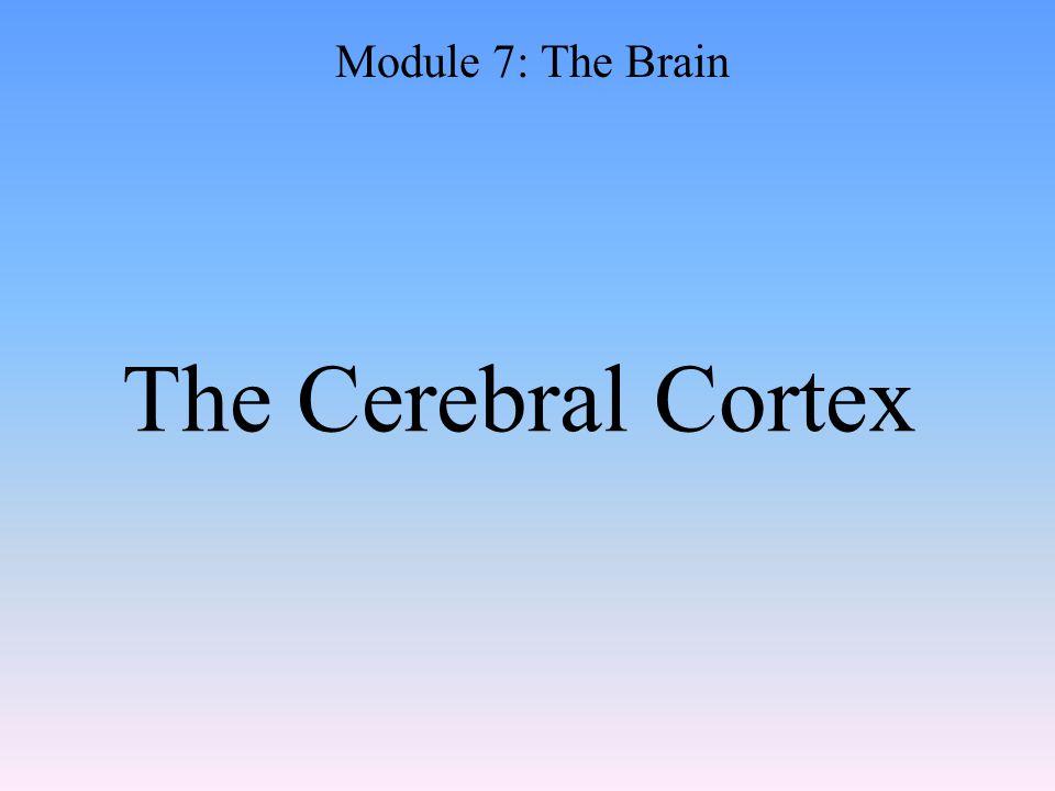 The Cerebral Cortex Module 7: The Brain