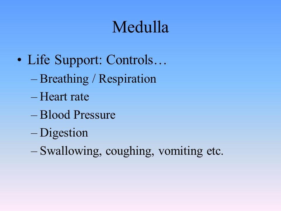 Medulla Life Support: Controls… –Breathing / Respiration –Heart rate –Blood Pressure –Digestion –Swallowing, coughing, vomiting etc.