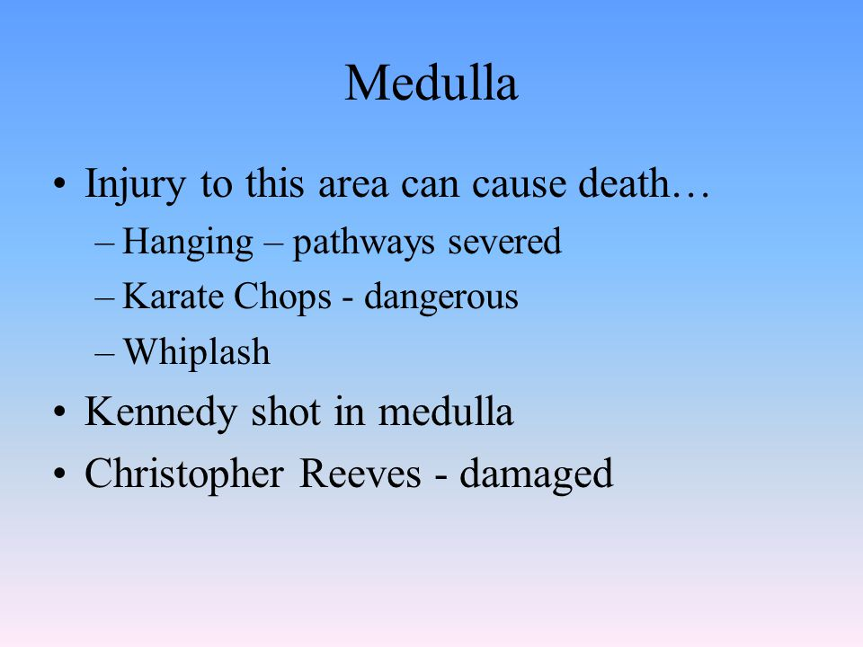 Medulla Injury to this area can cause death… –Hanging – pathways severed –Karate Chops - dangerous –Whiplash Kennedy shot in medulla Christopher Reeves - damaged