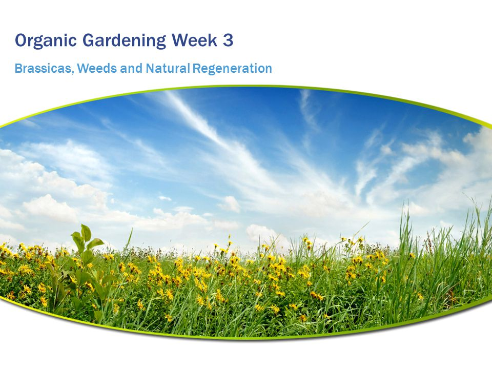 Organic Gardening Week 3 Brassicas, Weeds and Natural Regeneration