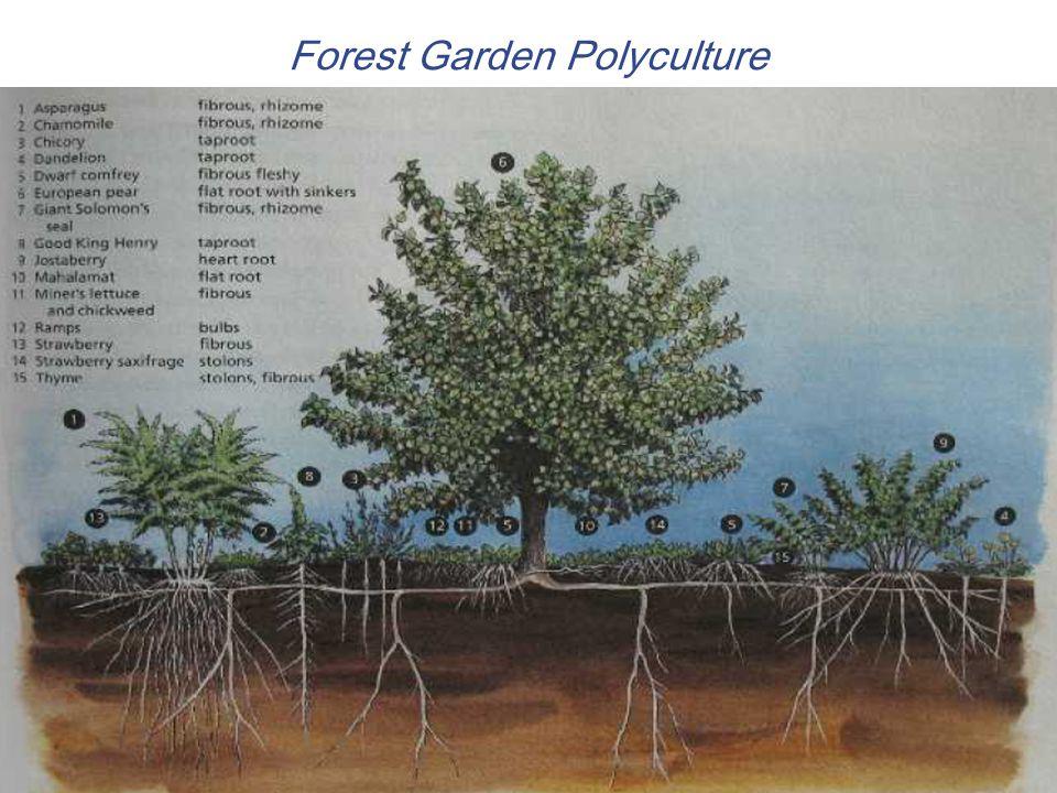 Forest Garden Polyculture