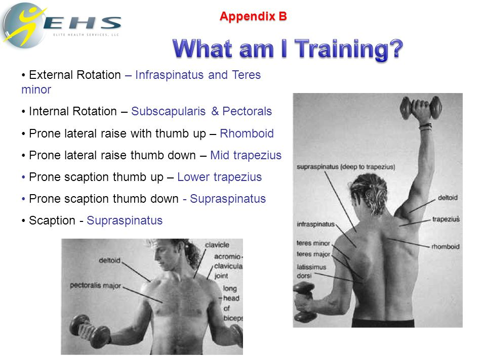 External Rotation – Infraspinatus and Teres minor Internal Rotation – Subscapularis & Pectorals Prone lateral raise with thumb up – Rhomboid Prone lateral raise thumb down – Mid trapezius Prone scaption thumb up – Lower trapezius Prone scaption thumb down - Supraspinatus Scaption - Supraspinatus Appendix B